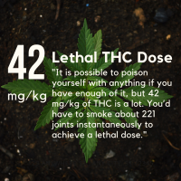 THC Overdose: What's Going On In Louisiana? | by J. Brandon Lowry | The No  BS Guide to Medical Cannabis | Medium