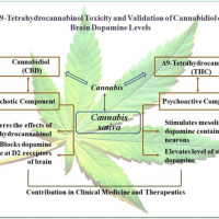 Δ 9-Tetrahydrocannabinol Toxicity and Validation of Cannabidiol on Brain  Dopamine Levels: An Assessment on Cannabis Duplicity.,Natural Products and  Bioprospecting - X-MOL