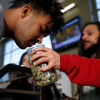 How Much Marijuana Would It Take to Kill You?