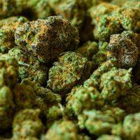 Two fined $120K for marijuana possession   Loop Trinidad & Tobago