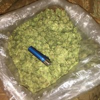 How Many Grams Are in a Pound of Weed? A Pound of Weed Cost?
