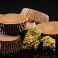 How To Make Weed Edibles [COMPLETE GUIDE]   Cannadish