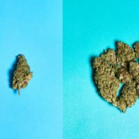 How many grams are in a quarter of weed? | Weedmaps