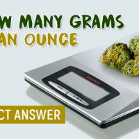 How Many Grams Are In An Ounce Of Weed? (Ultimate Guide) -
