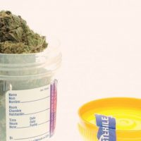 End of pre-employment drug testing doesn't mean you can't still be fired  for marijuana - Chicago Tribune