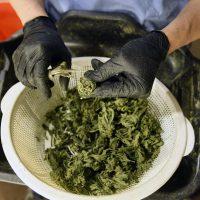 Average price per pound of retail marijuana continues to grow