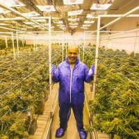 Mike Tyson smokes £33k of cannabis every month on his 40-acre marijuana  ranch in California
