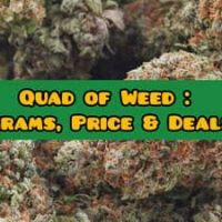 Quad of Weed: What is a Quad of Weed? How Many Grams is a Quad? | The  PotAdvisor