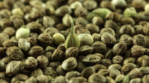 Eight ways marijuana seeds can be used for medicine every day - New York  Daily News