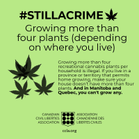Cannabis Regulations in Canada: 10 Things That Are Still A Crime - CCLA
