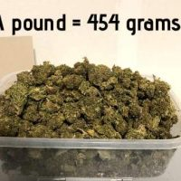 How Much is 3.5 Grams of Weed? - Plain Jane CBD