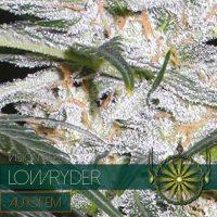 Lowryder AUTO Feminised Seeds