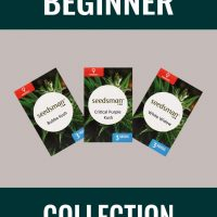 Beginner Collection Feminised Seeds