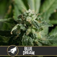 Blue Dream Feminised Seeds