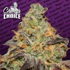 Blue Kush Berry Feminised Seeds (Chong's Choice)
