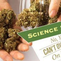 Yes, you can overdose on marijuana - New Bedford Guide