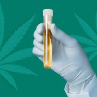 Can CBD show up on a drug test? | Leafly