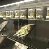 Denver's Weed Is Cheap Compared to Most Cities: Do Consumers Appreciate It?    Westword