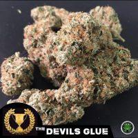 Devil's Glue Feminised Seeds