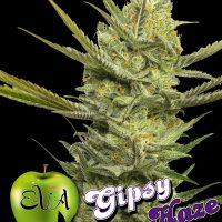 Gipsy Haze Feminised Seeds