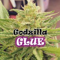 Godzilla Glue Feminised Seeds
