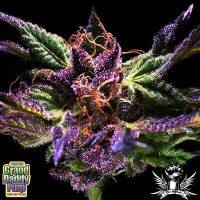 Graddaddy Purple original