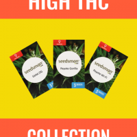 High THC Collection Feminised Seeds