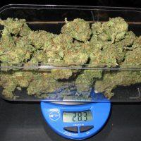 Marijuana Weight: Grams, Quarters and Ounces Explained