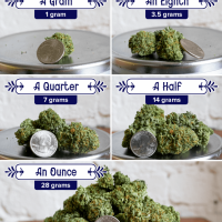 How much is an Eighth of Weed? Quarter for Scale | Decibel Lifestyle