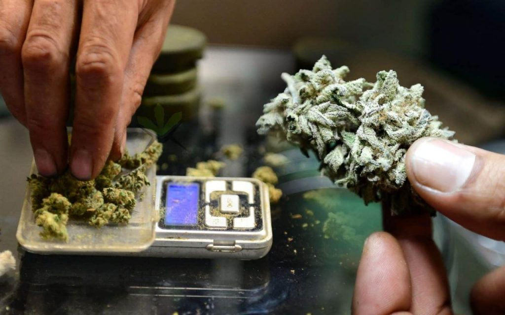 How Many Grams In A Pound Of Weed? • Green Rush Daily