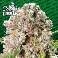 Mendocino Skunk Feminised Seeds (Chong's Choice)