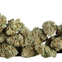 How much does weed cost: grams, quarters, ounces and pounds, Know What You  should be Paying -