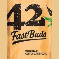 Original Critical Auto Feminised Seeds