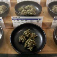 PolitiFact | Pot 101: Facts you should know about California's legal  marijuana