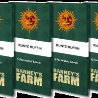 Runtz Muffin Feminised Seeds