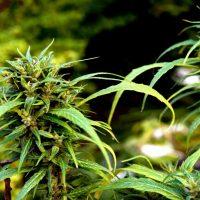Wisconsin Governor 'Tired' Of Marijuana Revenue Going To Illinois Next Door  | Marijuana Moment