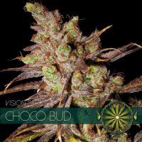 Choco Bud