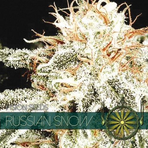 Russian Snow Feminised Seeds