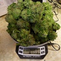 Where to get a good weed scale in Canada | Cannabis wiki