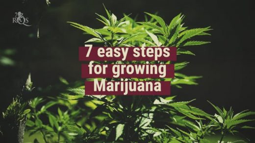 How To Grow Weed in 7 Easy Steps - Royal Queen Seeds