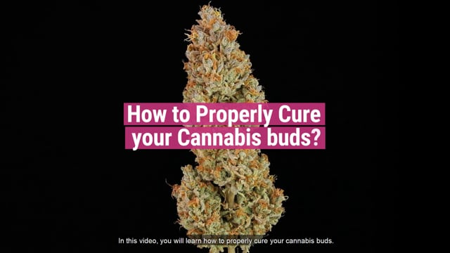 How to Cure Your Cannabis Buds - RQS Blog