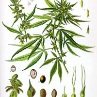 Why was Marijuana Made Illegal in the First Place? -part I   by Edward  Dodge   Medium