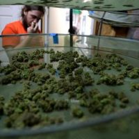 A Colorado marijuana guide: 64 answers to commonly asked questions – The  Denver Post