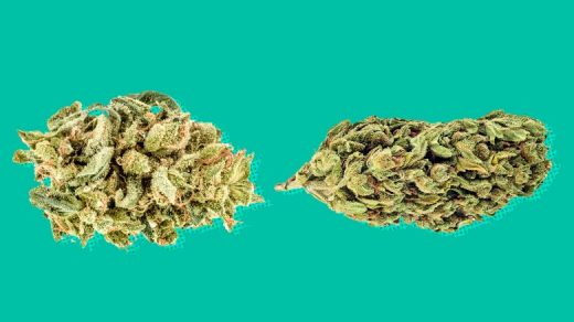 Indica vs. sativa: The difference isn't based on science.