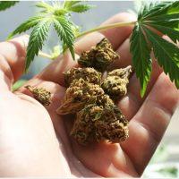FDA warning on miracle marijuana cures for cancer