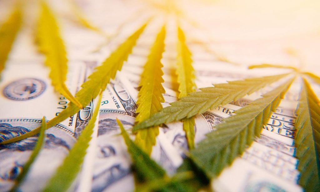 Why Are Cannabis Stocks Down? - The Fresh Toast