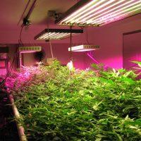 Grow Lights for Plants like Cannabis - LED Grow Lights Judge