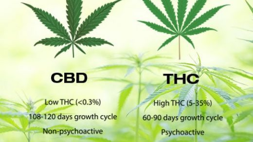The Difference Between CBD and THC - First Crop