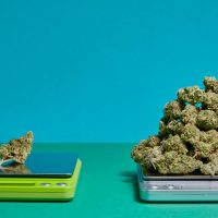 How many grams are in an ounce of weed?   Weedmaps