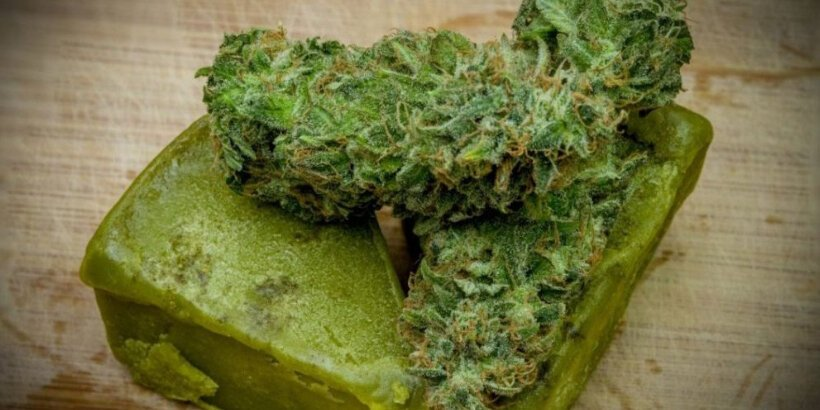 Recipe: Extracting Cannabis into Oil or Butter | Chelsea Green Publishing